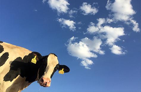 alternativas, leche de vaca, leche de soja, leche de alpiste, leche de arroz, leche de trigo de sarraceno